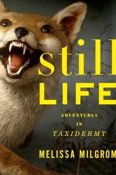 still-life1